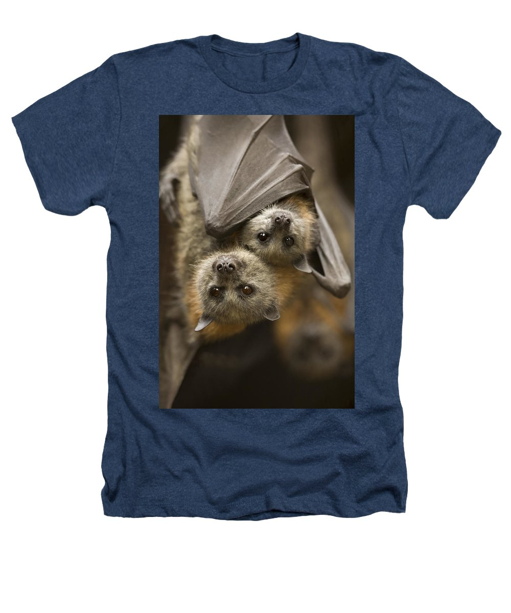 Bats Heathers T-Shirt featuring the photograph Hang In There by Mike Dawson