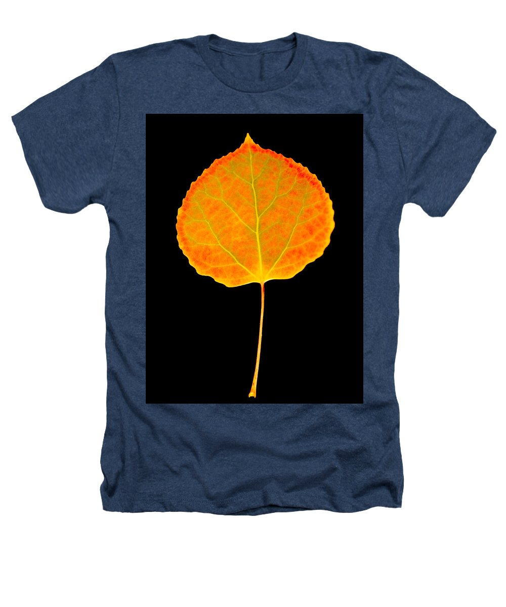 Leaf Heathers T-Shirt featuring the photograph Aspen Leaf by Marilyn Hunt