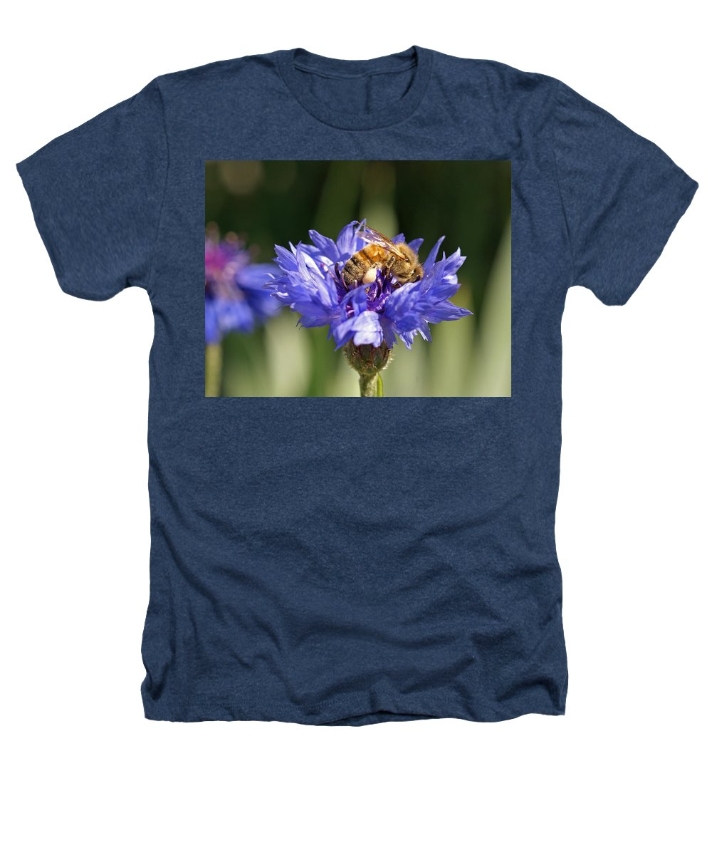 Bee. Flower Heathers T-Shirt featuring the photograph Bachelor Button And Bee by Heather Coen