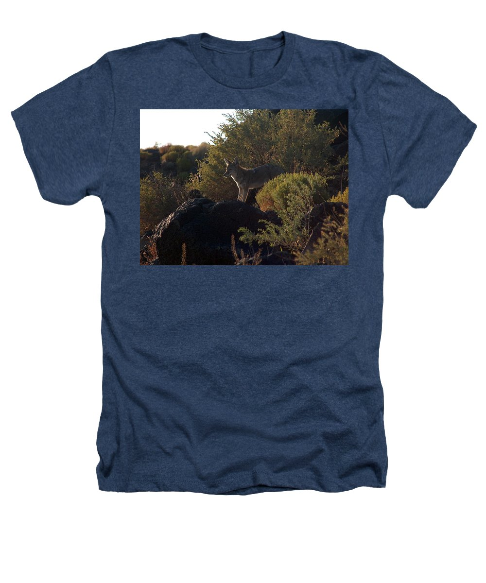 Coyote Heathers T-Shirt featuring the photograph Coyote At The Petrogyphs 2 by Tim McCarthy