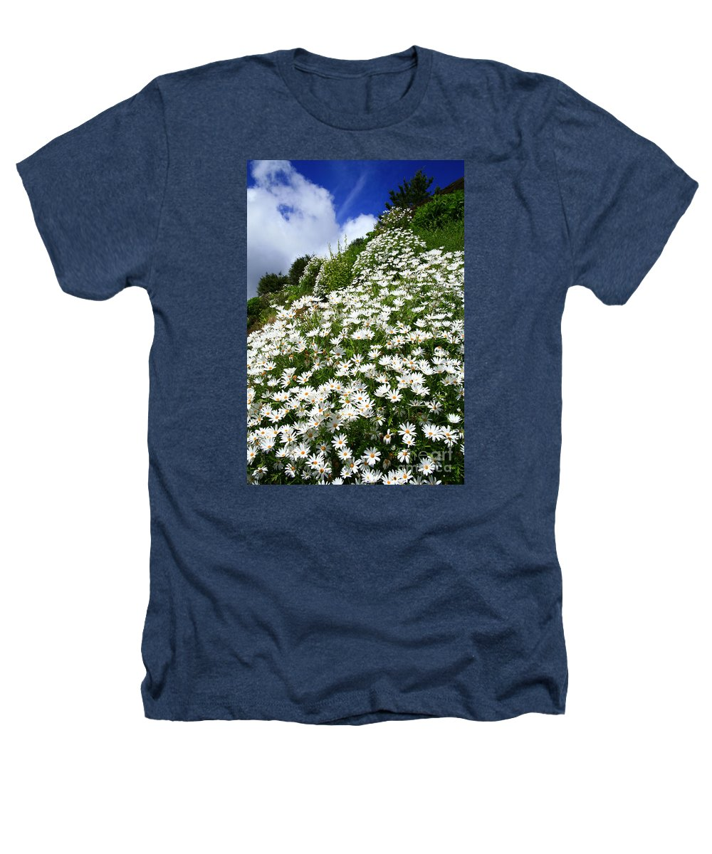 Countryside Heathers T-Shirt featuring the photograph Daisies by Gaspar Avila