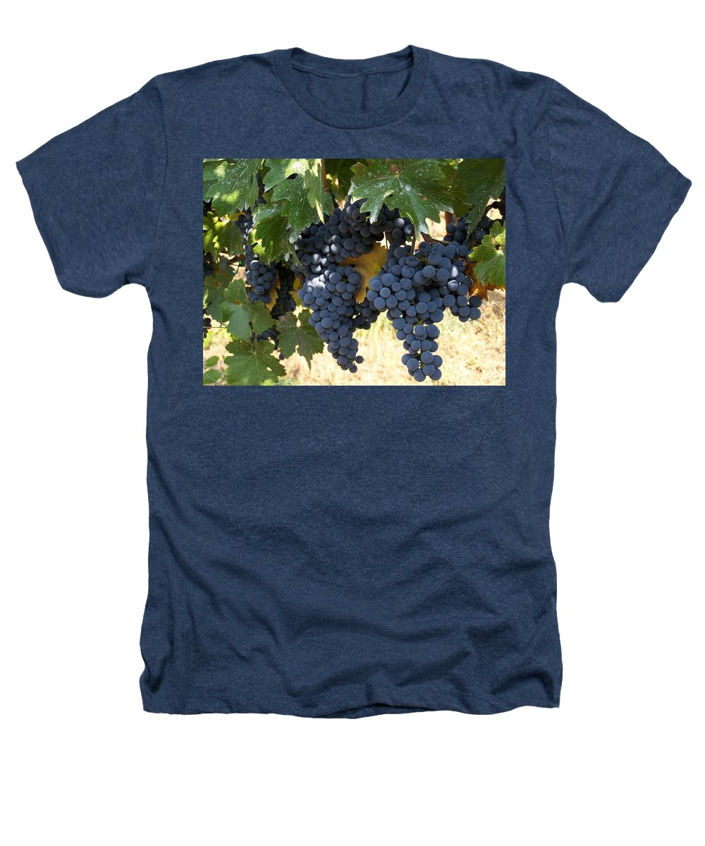 Grapes Heathers T-Shirt featuring the photograph Harvest Time by Gale Cochran-Smith