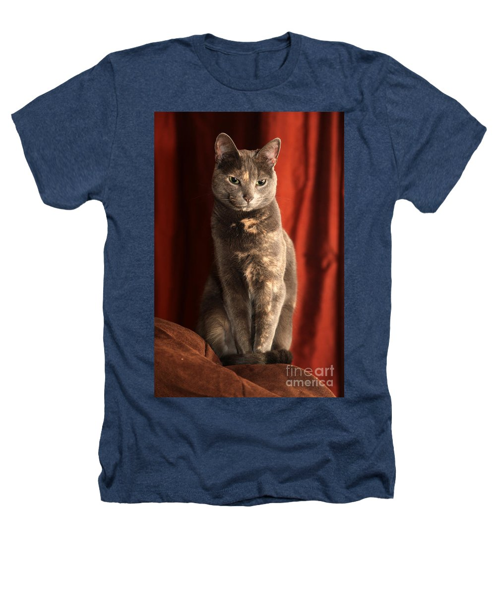 Cat Heathers T-Shirt featuring the photograph Mollie by Amanda Barcon