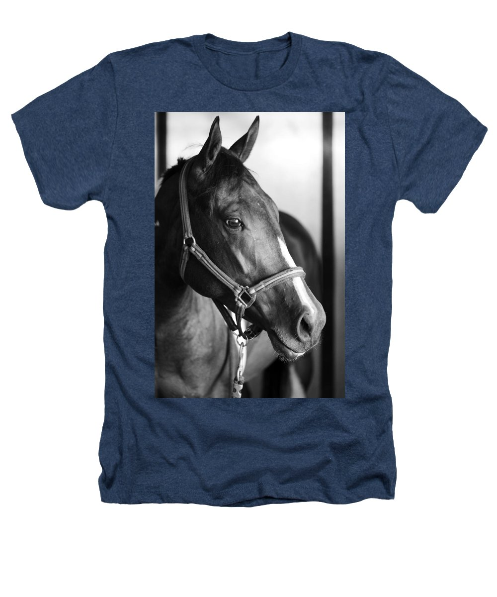 Horse Heathers T-Shirt featuring the photograph Horse And Stillness by Marilyn Hunt