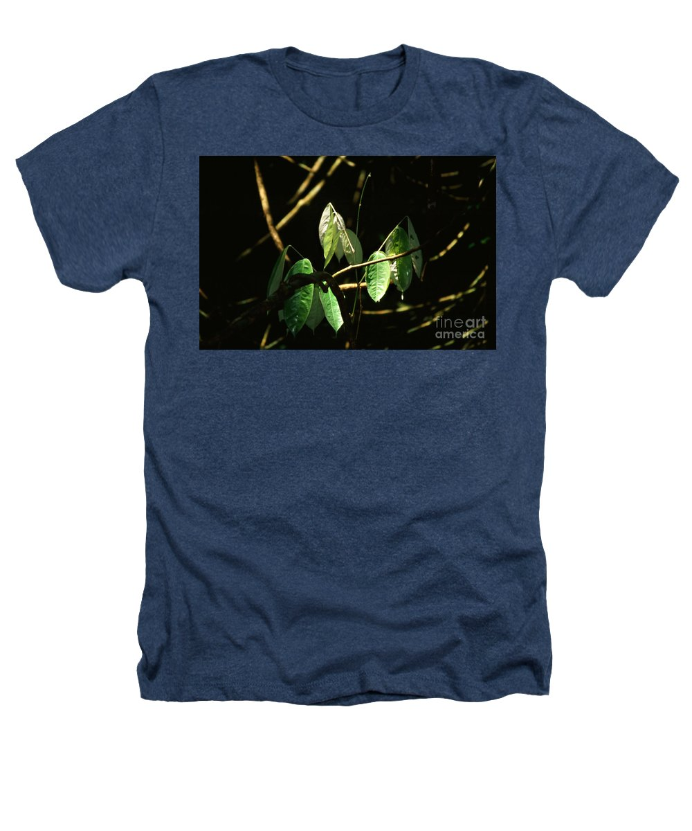 Leaves Heathers T-Shirt featuring the photograph Sunlit Leaves by Kathy McClure