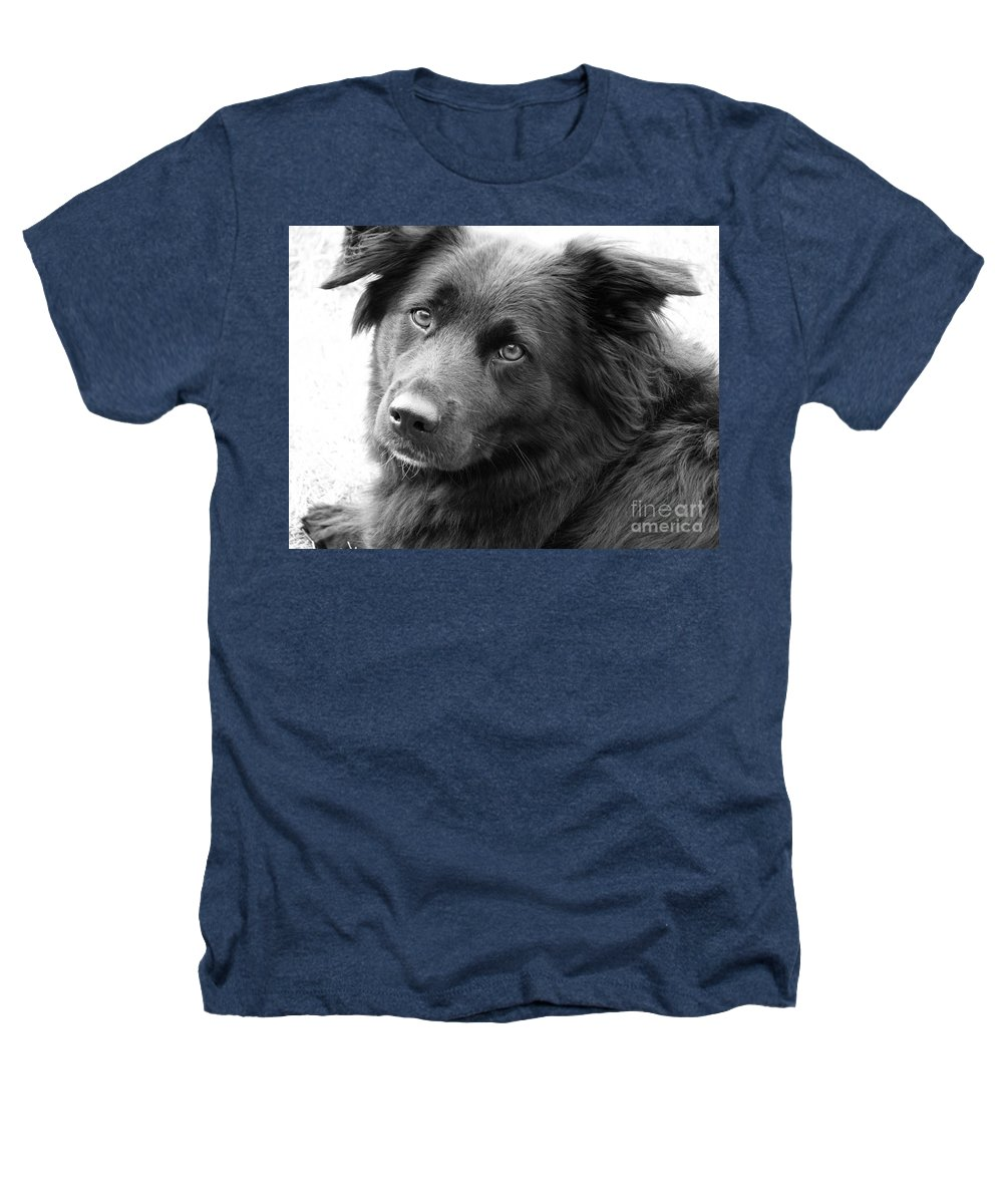 Dog Heathers T-Shirt featuring the photograph Thinking by Amanda Barcon