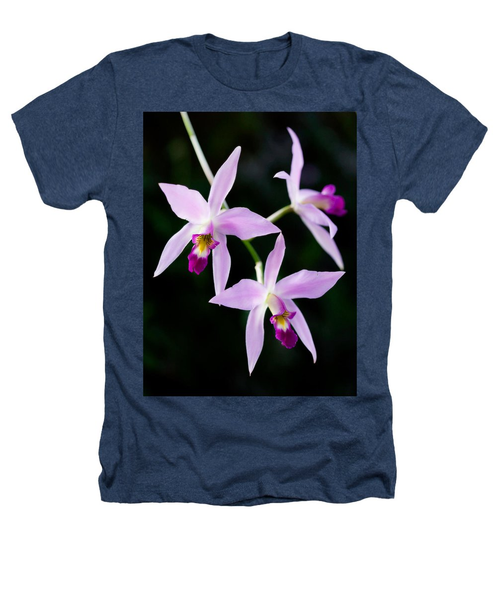 Orchid Heathers T-Shirt featuring the photograph Three Orchids by Marilyn Hunt