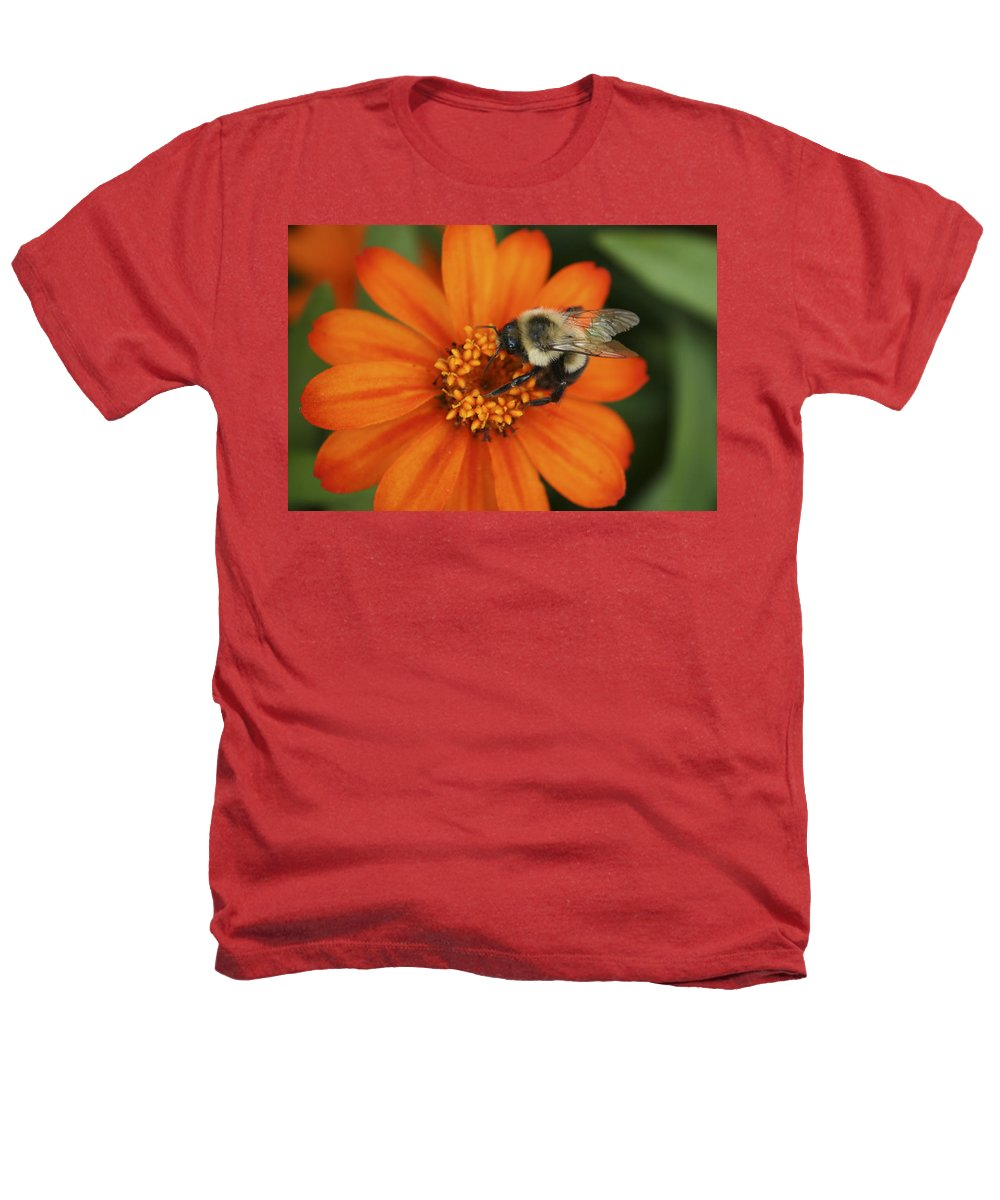 Bee Heathers T-Shirt featuring the photograph Bee On Aster by Margie Wildblood