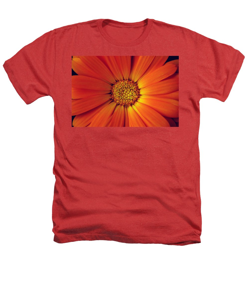 Plant Heathers T-Shirt featuring the photograph Close Up Of An Orange Daisy by Ralph A Ledergerber-Photography
