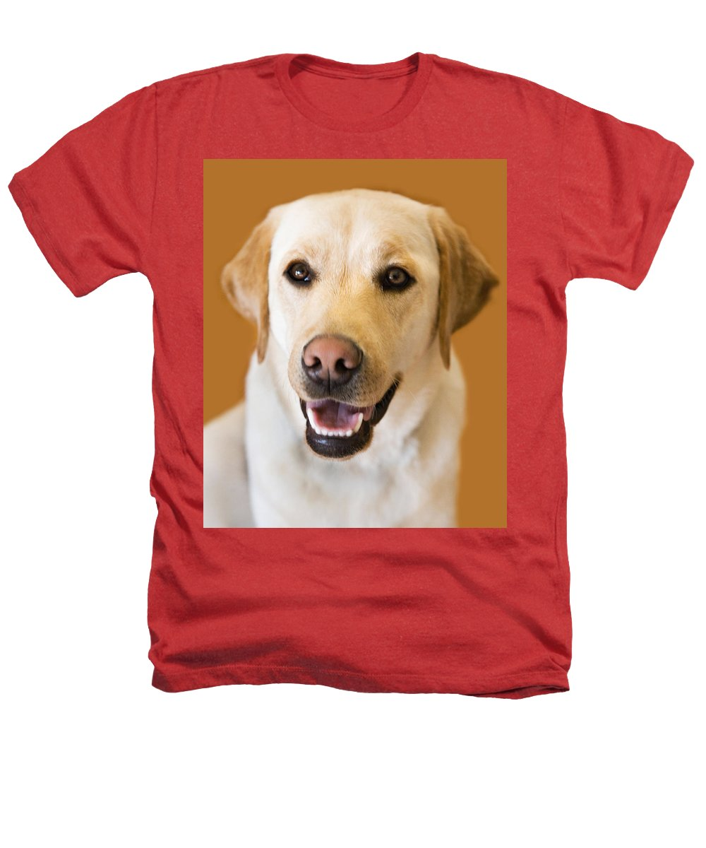 Lab Heathers T-Shirt featuring the photograph Golden Lab by Marilyn Hunt