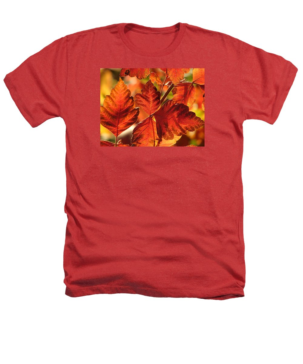 Tree Heathers T-Shirt featuring the photograph Jack Painted My Yard by J R Seymour