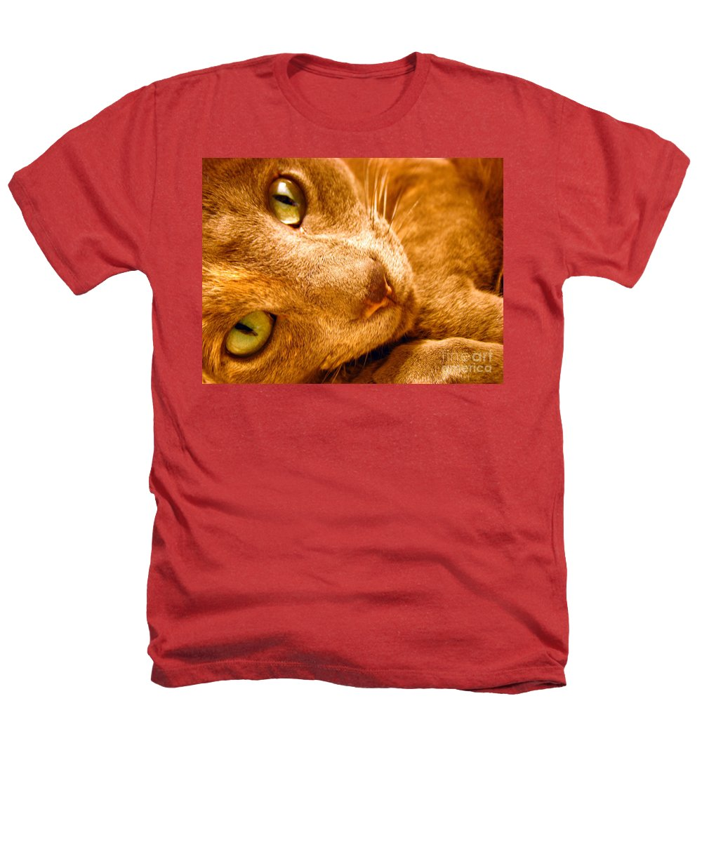 Cats Heathers T-Shirt featuring the photograph Kitty by Amanda Barcon