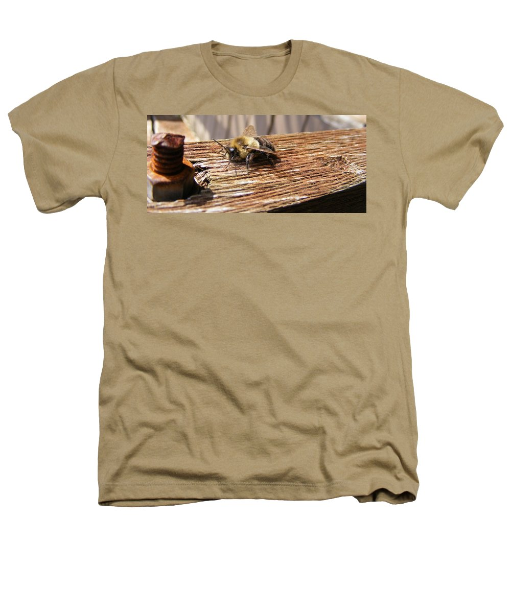 Bee Heathers T-Shirt featuring the photograph Bee-u-tiful by Ed Smith