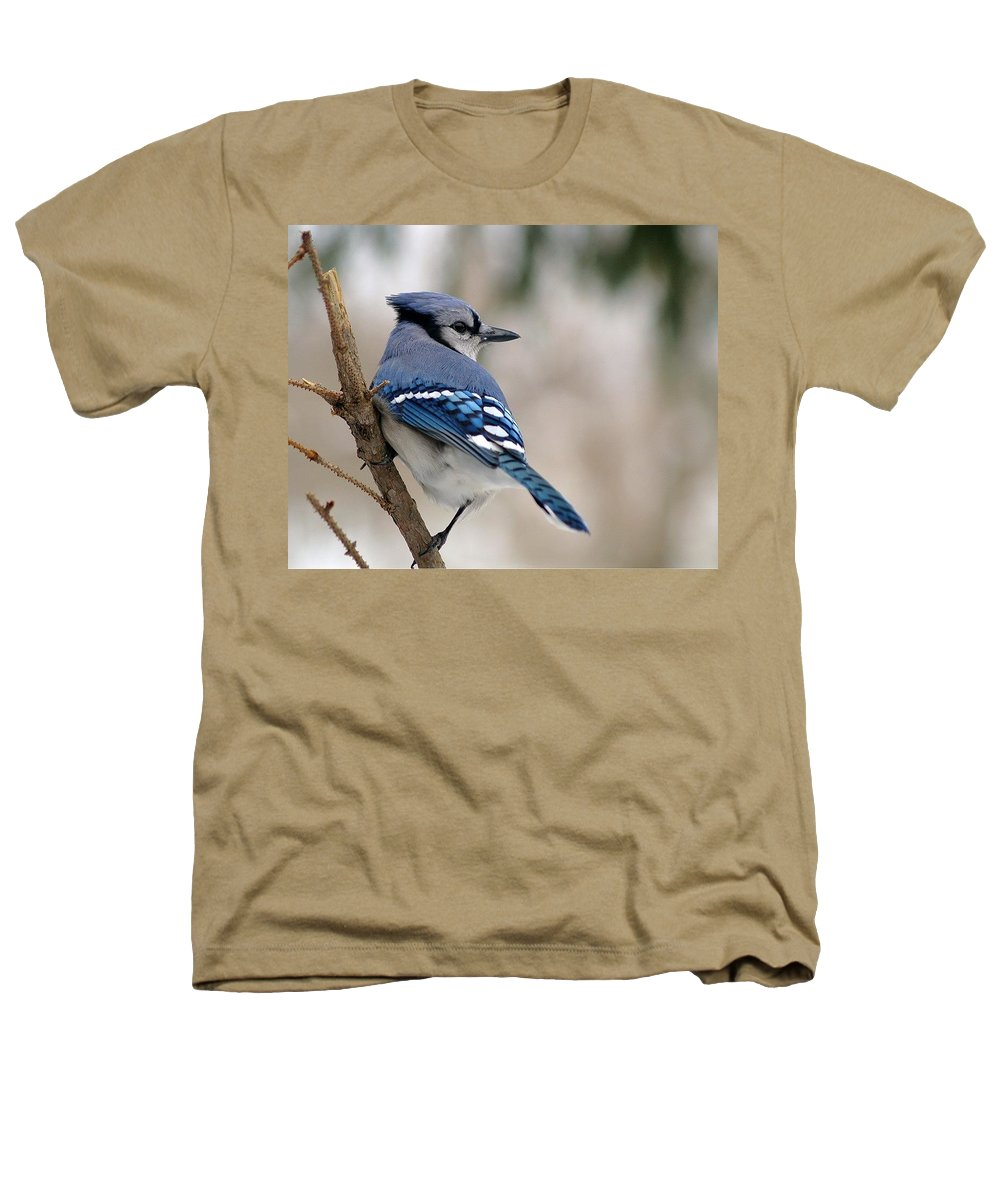 Blue Jay Heathers T-Shirt featuring the photograph Blue Jay by Gaby Swanson