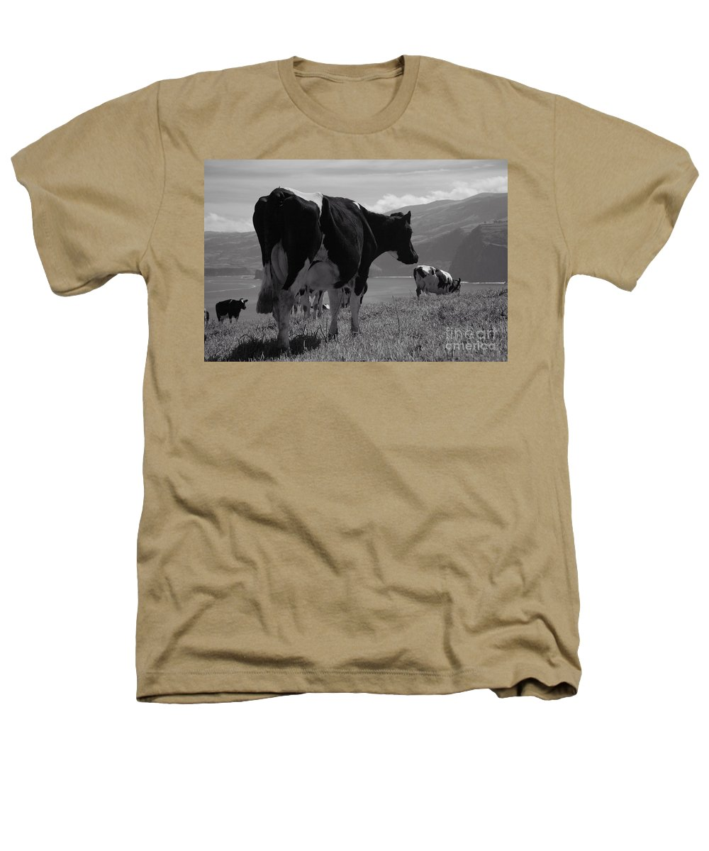 Azoren Heathers T-Shirt featuring the photograph Cows by Gaspar Avila