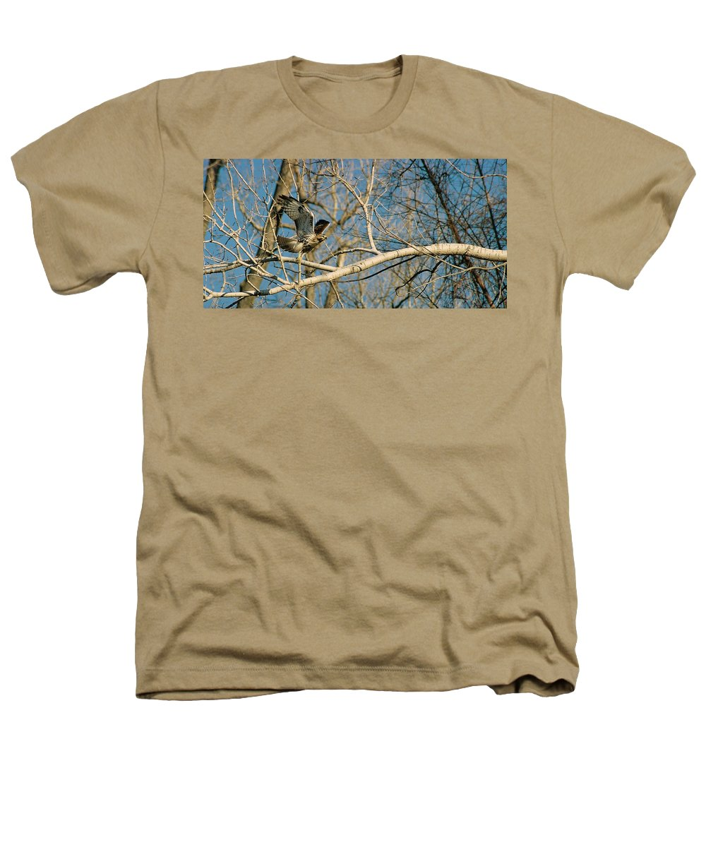 Hawk Heathers T-Shirt featuring the photograph Hawk by Steve Karol