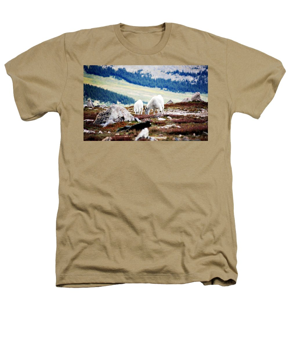Animal Heathers T-Shirt featuring the photograph Mountain Goats 2 by Marilyn Hunt