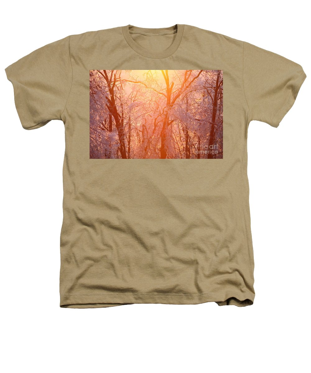 Pink Heathers T-Shirt featuring the photograph Pink And Gold by Nadine Rippelmeyer