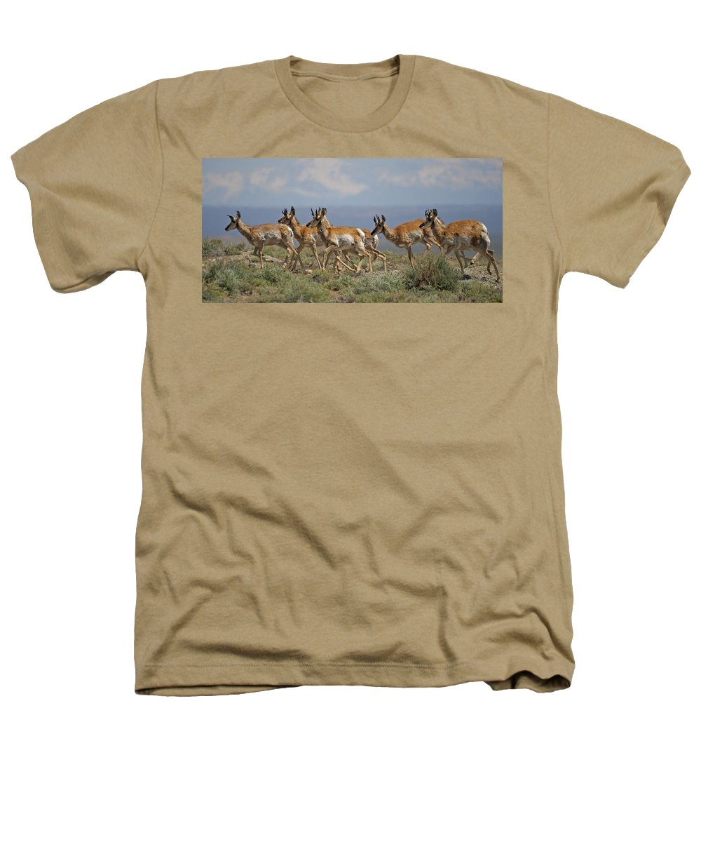 Pronghorn Heathers T-Shirt featuring the photograph Pronghorn Antelope Running by Heather Coen