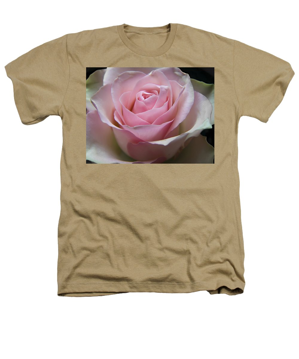 Rose Heathers T-Shirt featuring the photograph Rose by Daniel Csoka