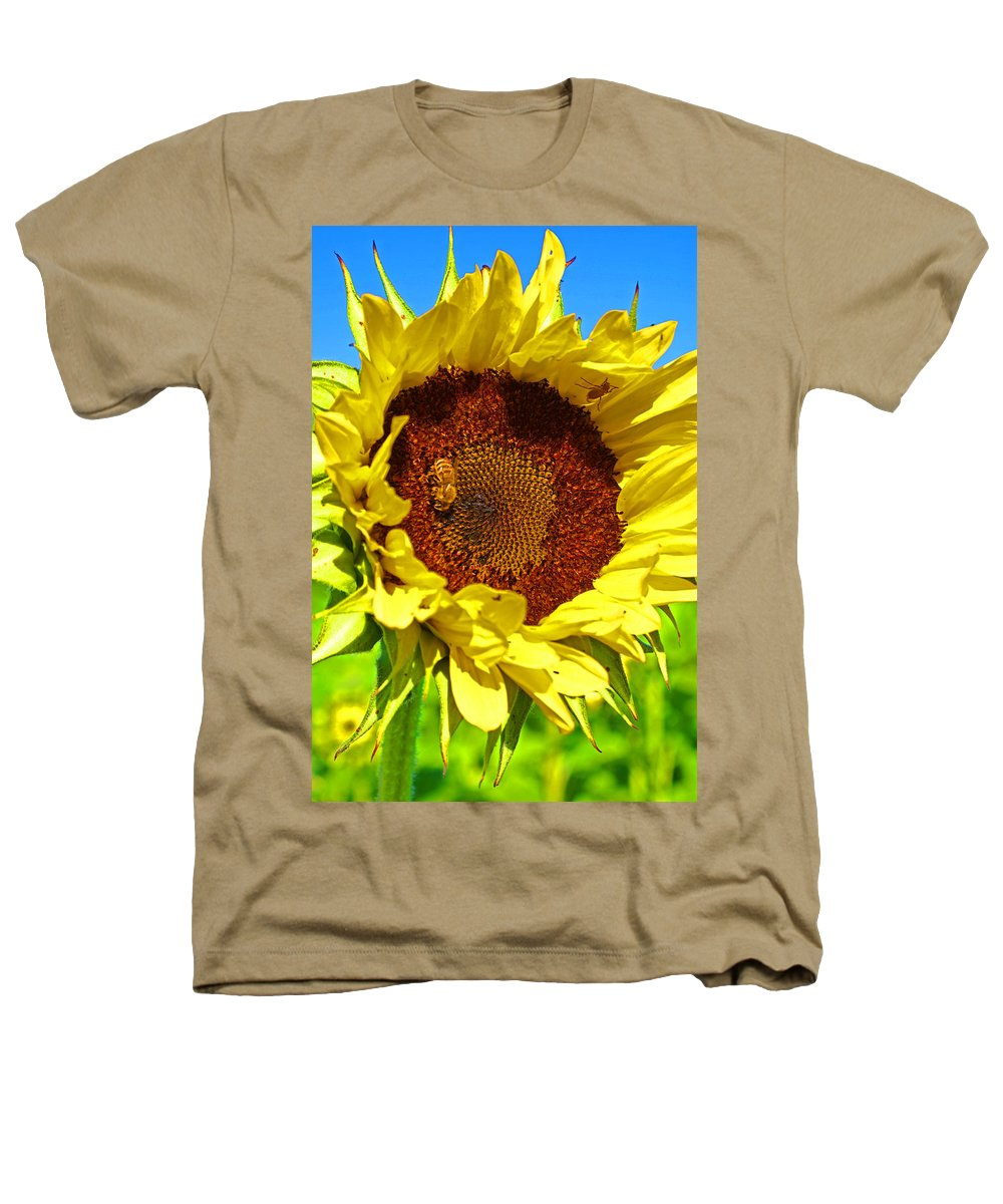 Pastoral Heathers T-Shirt featuring the photograph Sunflower And Bee by Heather Coen