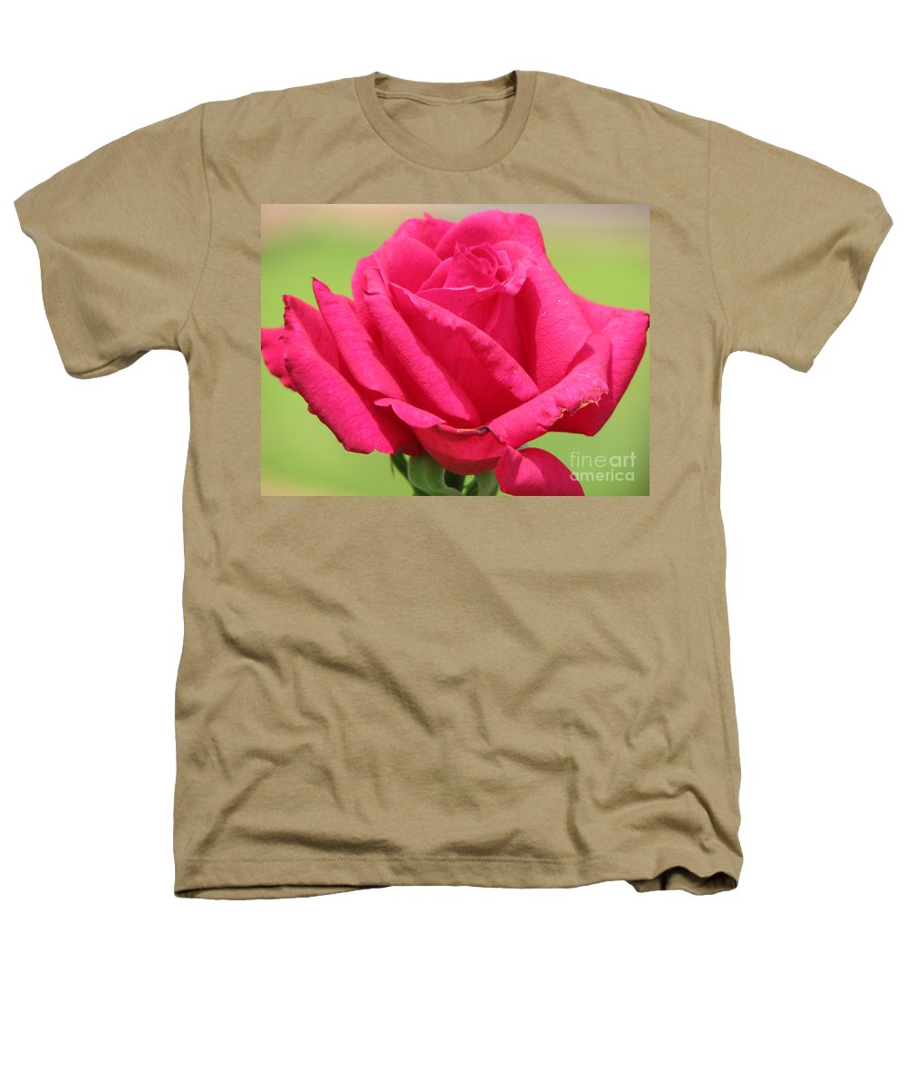 Roses Heathers T-Shirt featuring the photograph The Rose by Amanda Barcon