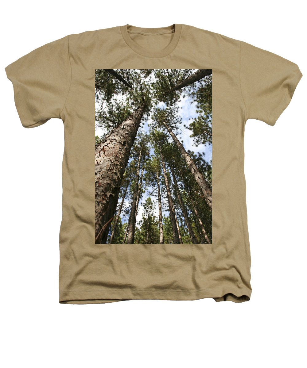 Autumn Heathers T-Shirt featuring the photograph Tree Stand by Margie Wildblood