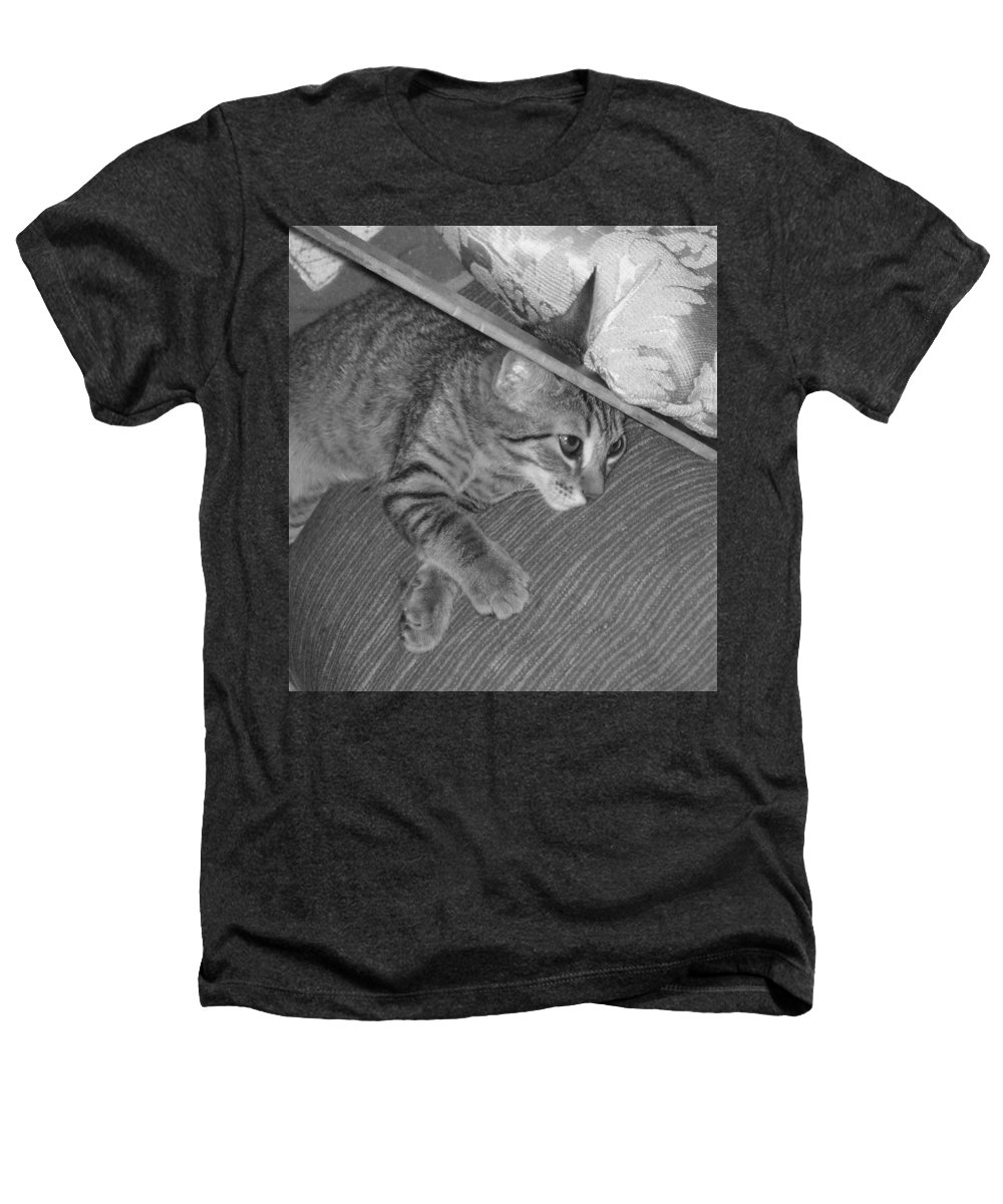 Kitten Heathers T-Shirt featuring the photograph Model Kitten by Pharris Art