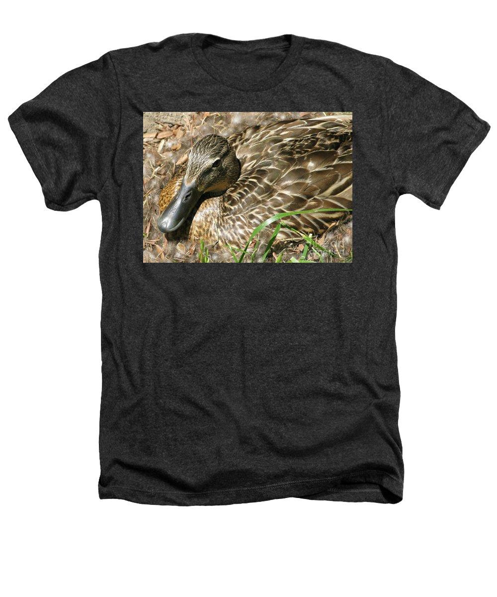 Mallard Heathers T-Shirt featuring the photograph Nesting Mallard by Ann Horn