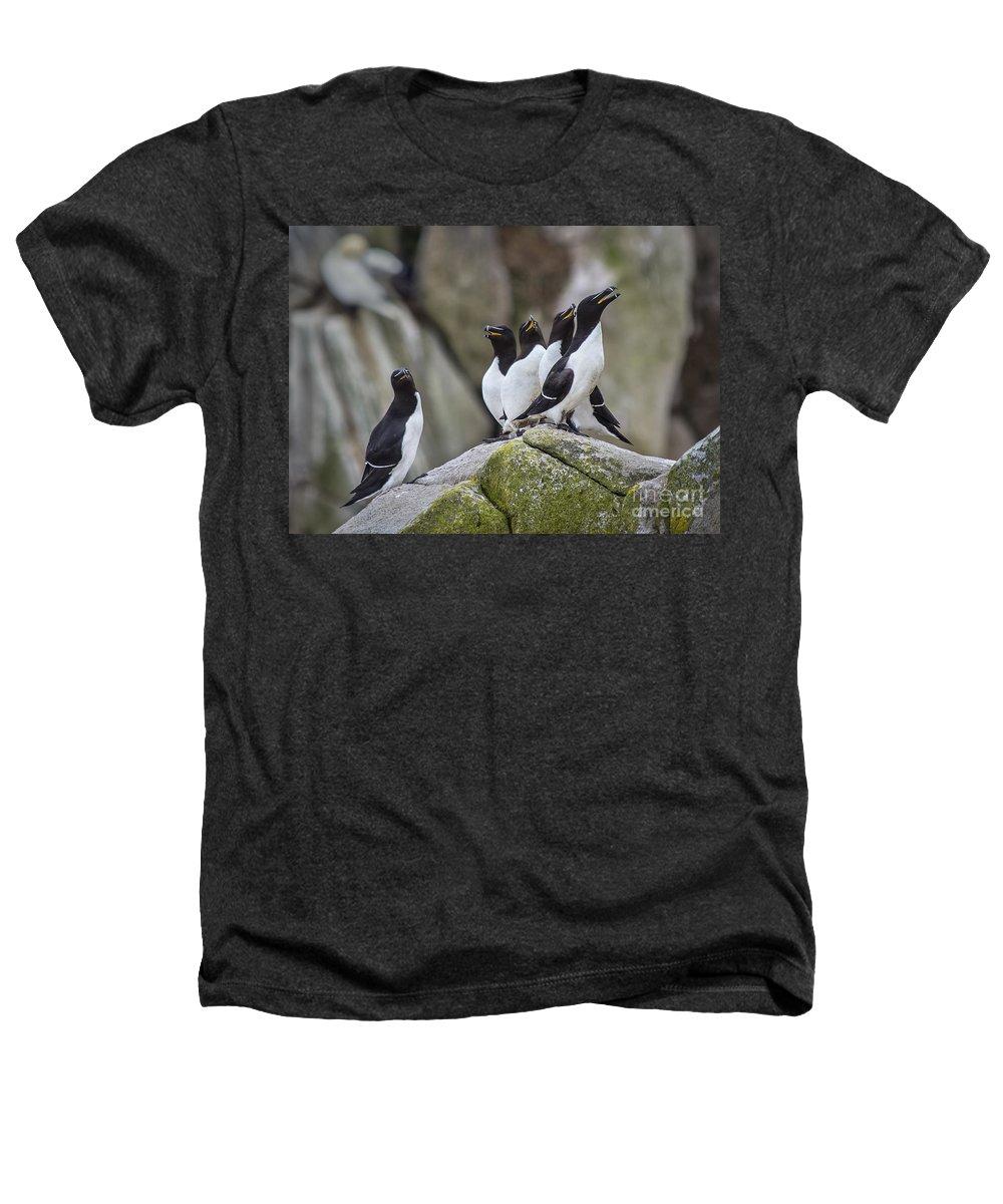Razorbill Heathers T-Shirts