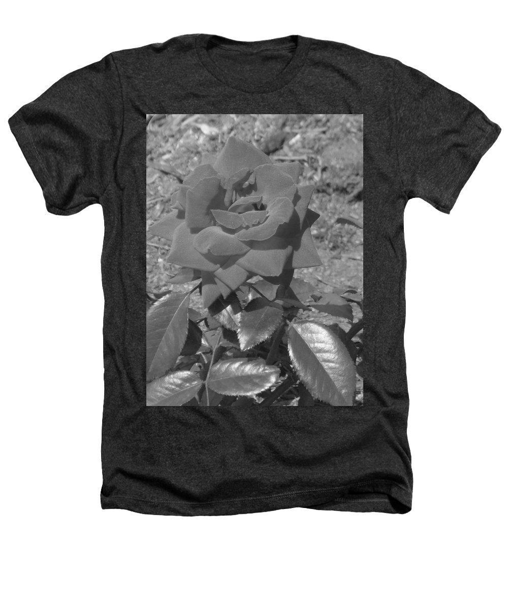 Rose Heathers T-Shirt featuring the photograph Velvet Rose by Pharris Art