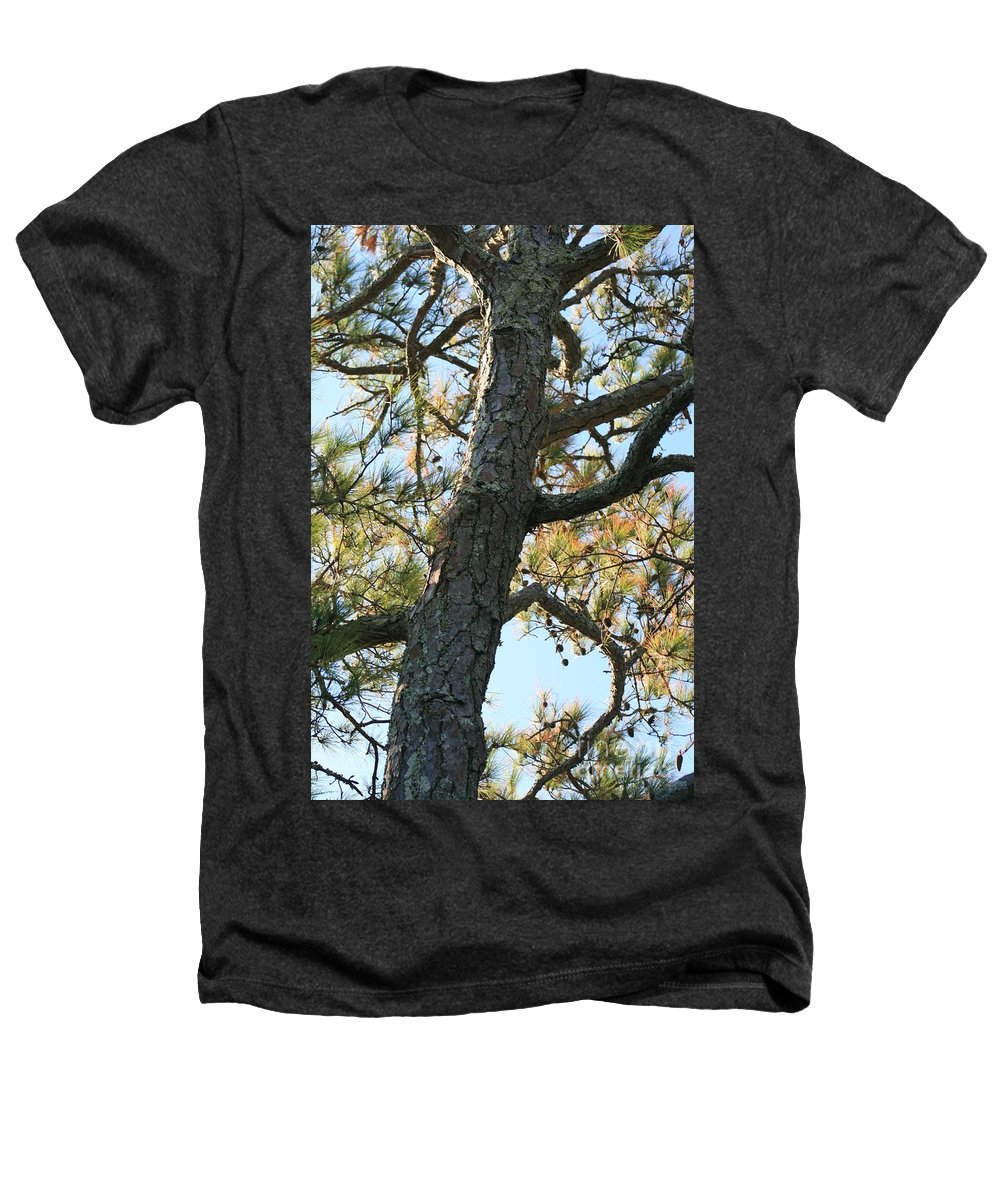 Tree Heathers T-Shirt featuring the photograph Bald Head Tree by Nadine Rippelmeyer