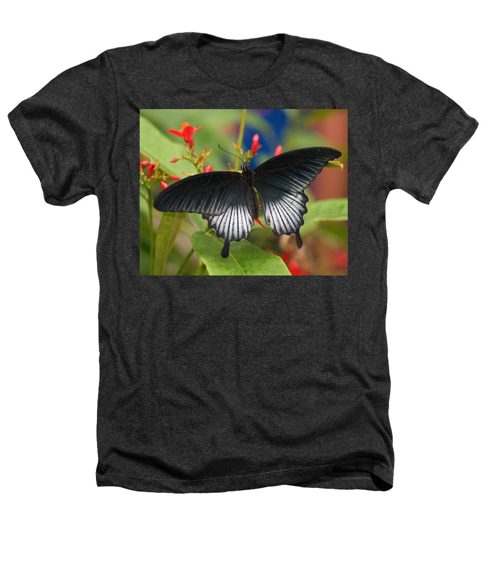Butterfly Heathers T-Shirt featuring the photograph Black Beauty by Gaby Swanson