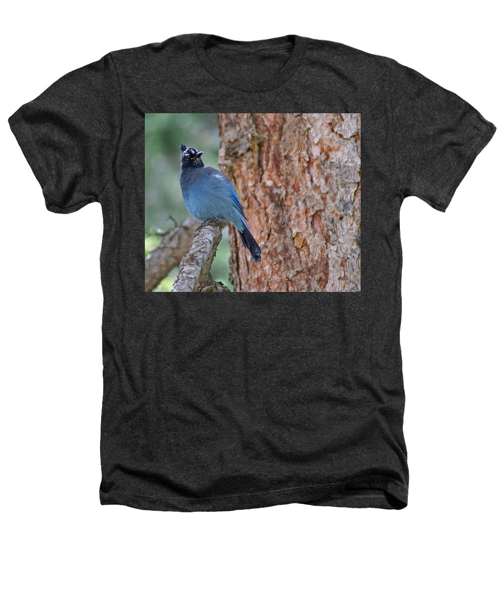 Blue Jay Heathers T-Shirt featuring the photograph Blue Jay by Heather Coen