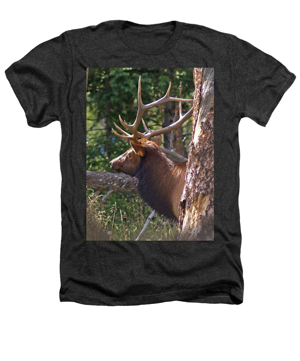 Elk Heathers T-Shirt featuring the photograph Bull Elk 2 by Heather Coen