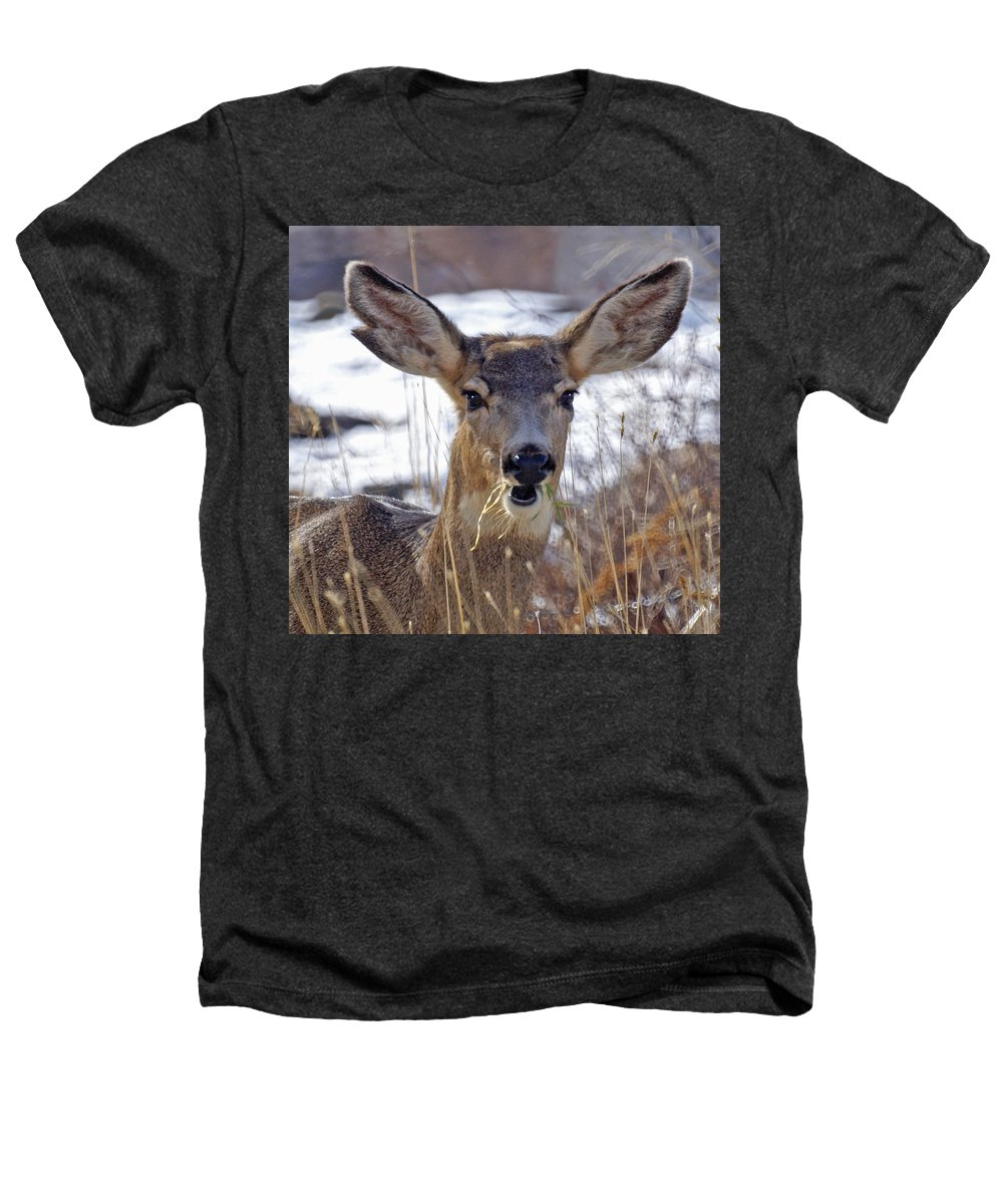 Doe Heathers T-Shirt featuring the photograph Doe by Heather Coen