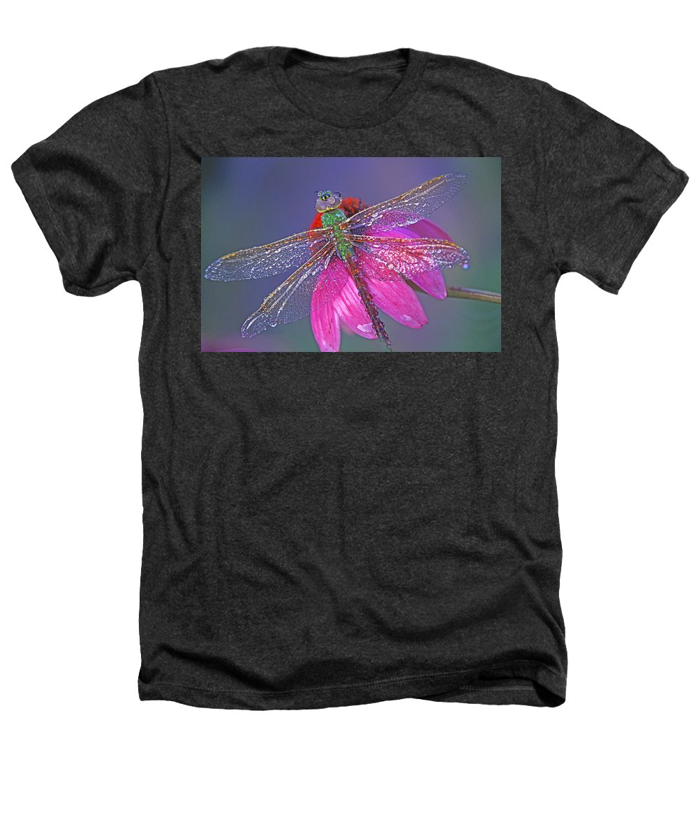 Dew Covered Dragonfly Rests On Purple Cone Flower Heathers T-Shirt featuring the photograph Dreaming Dragon by Bill Morgenstern