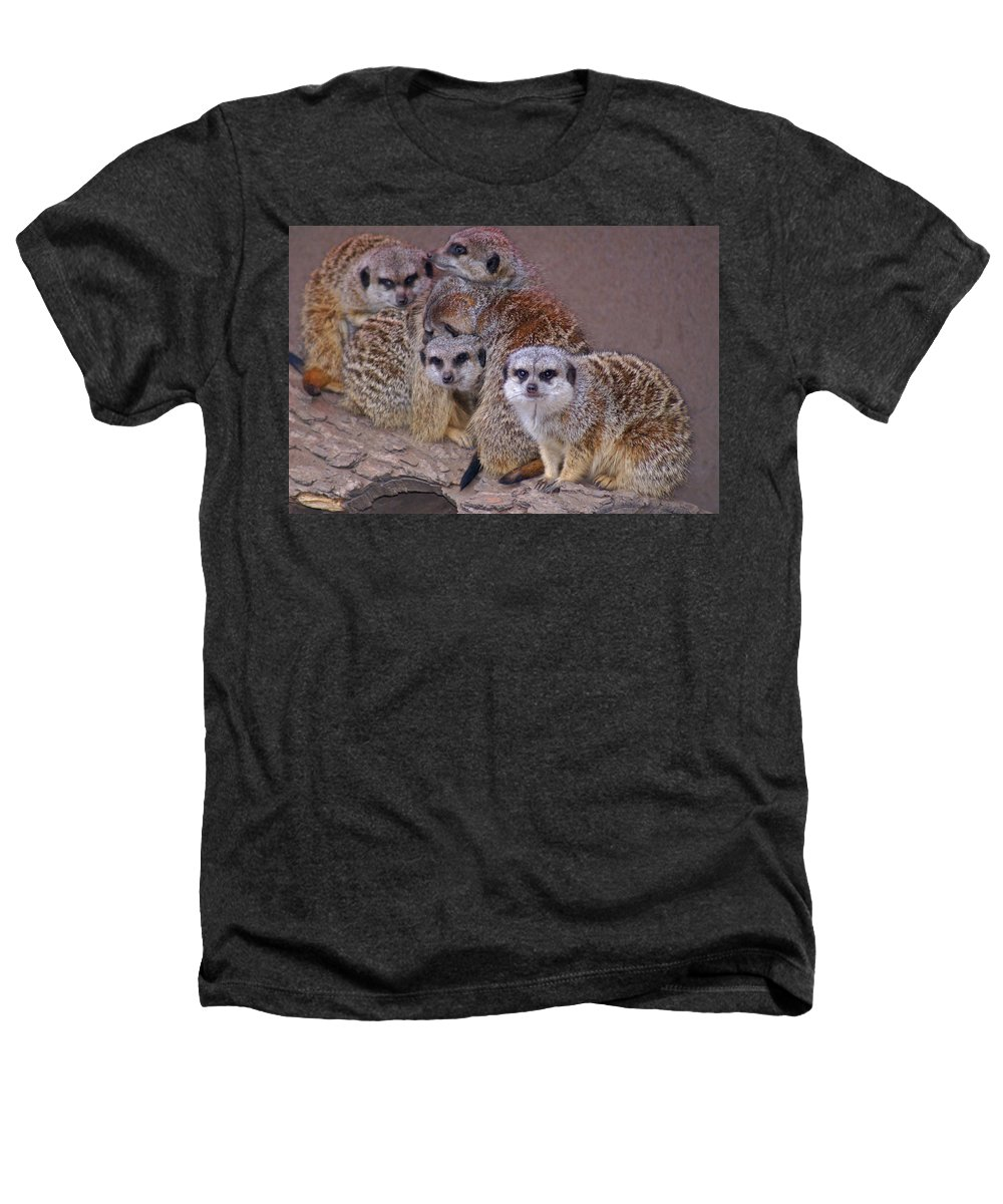 Mer Cats Heathers T-Shirt featuring the photograph Freezing Meer Cats by Heather Coen