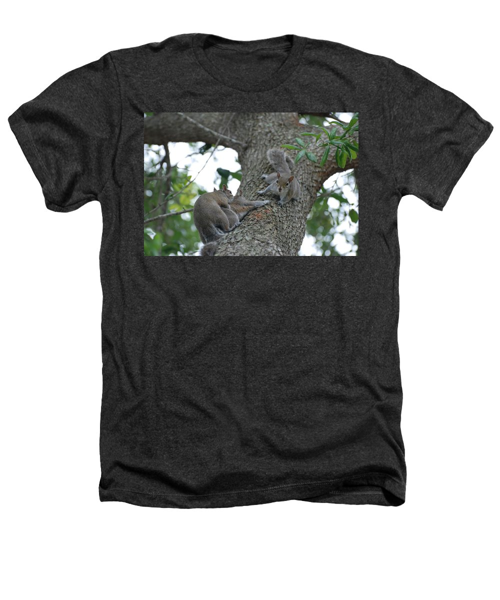 Squirrel Heathers T-Shirt featuring the photograph Luck Be A Lady by Rob Hans