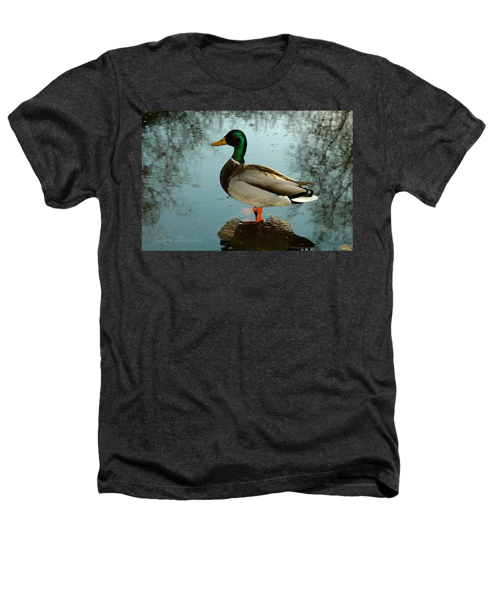 Clay Heathers T-Shirt featuring the photograph Mallard by Clayton Bruster
