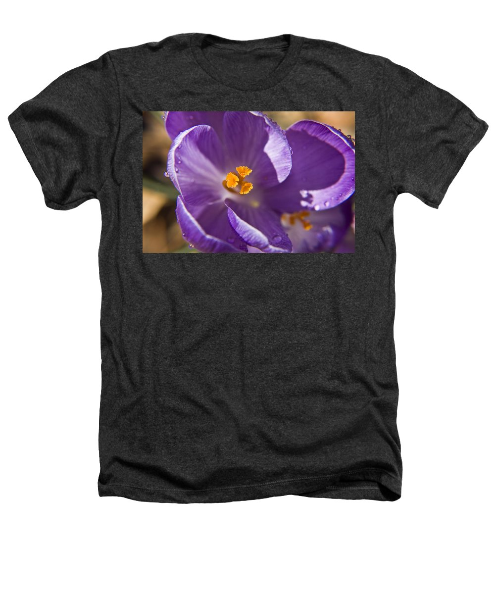 Crocus Heathers T-Shirt featuring the photograph Purple Spring Crocus by Teresa Mucha