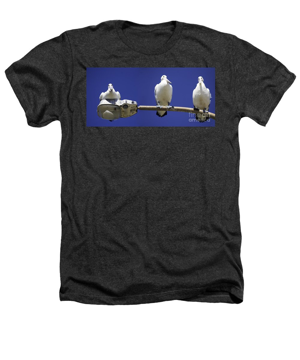 Australian White Pelicans Heathers T-Shirt featuring the photograph Three Pelicans On A Lamp Post by Avalon Fine Art Photography