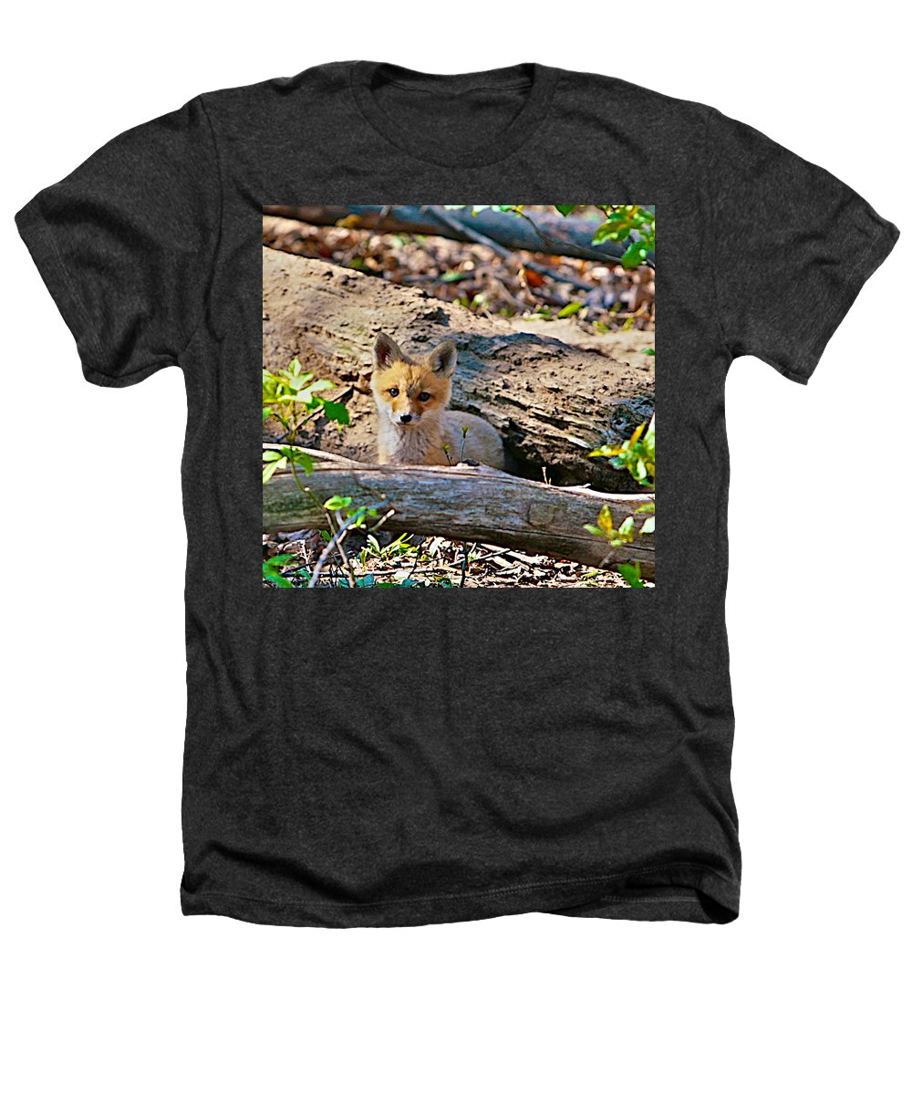 Fox Heathers T-Shirt featuring the photograph What A Fox by Robert Pearson
