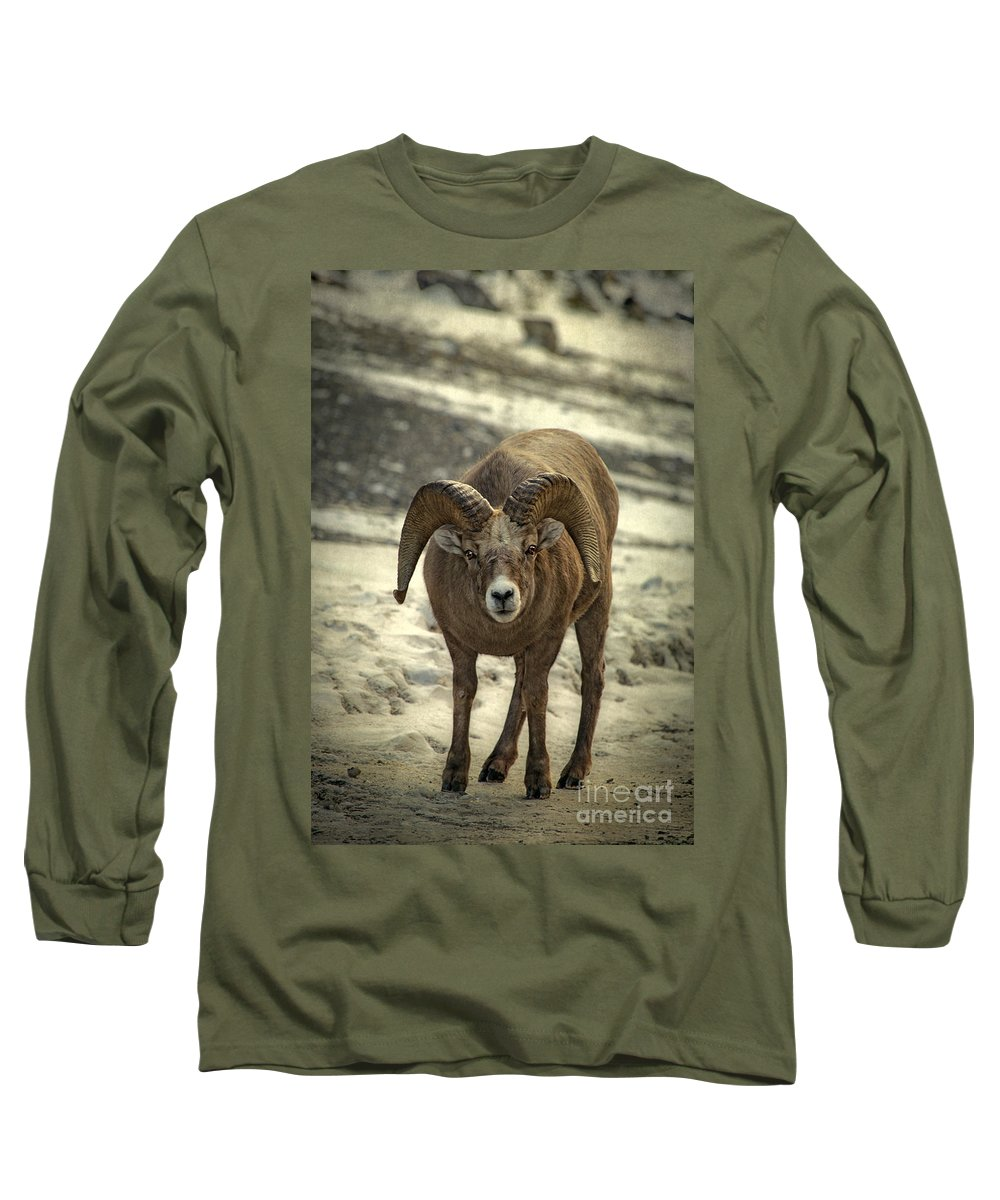 Rocky Mountain Bighorn Sheep Long Sleeve T-Shirts