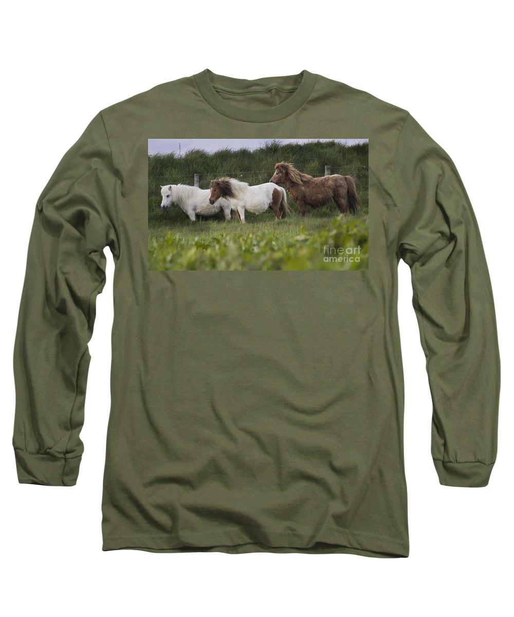 Shetland Long Sleeve T-Shirt featuring the photograph Three Ponies by Angel Ciesniarska
