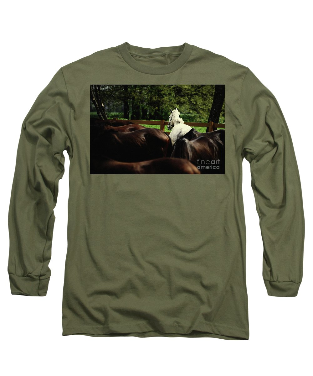 Horse Long Sleeve T-Shirt featuring the photograph Calm Horses by Dimitar Hristov