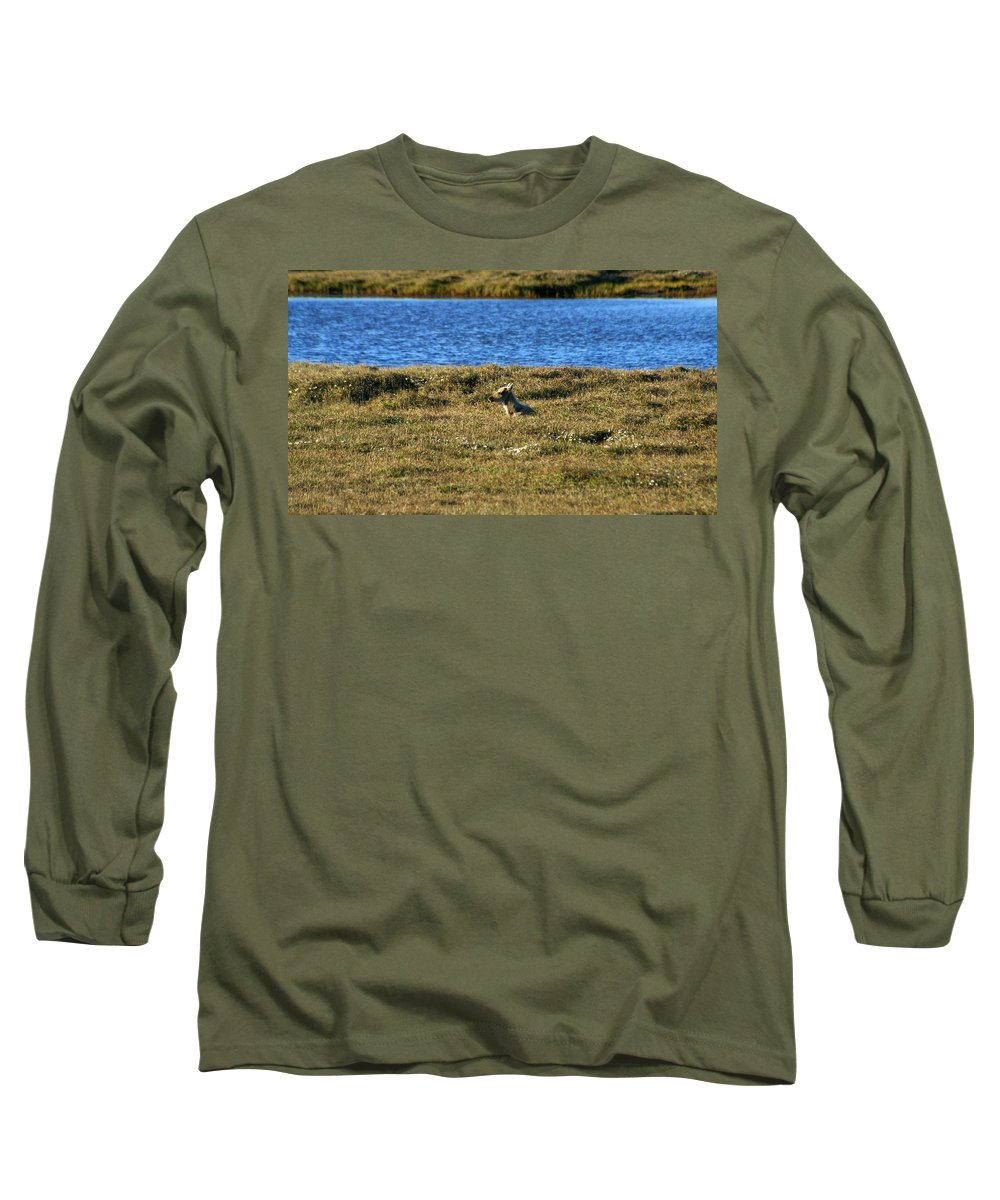 Caribou Long Sleeve T-Shirt featuring the photograph Fawn Caribou by Anthony Jones