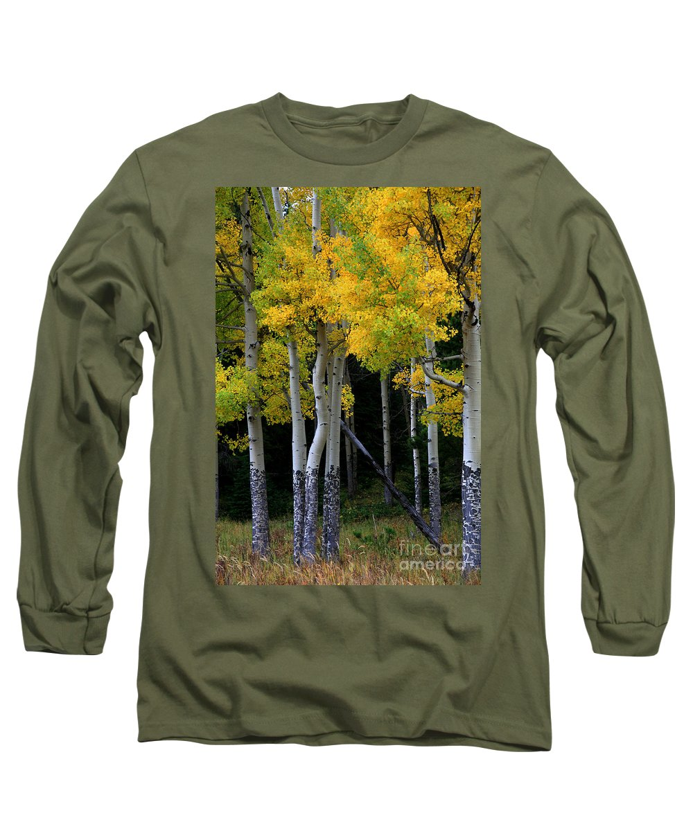 Aspens Long Sleeve T-Shirt featuring the photograph Leaning Aspen by Timothy Johnson