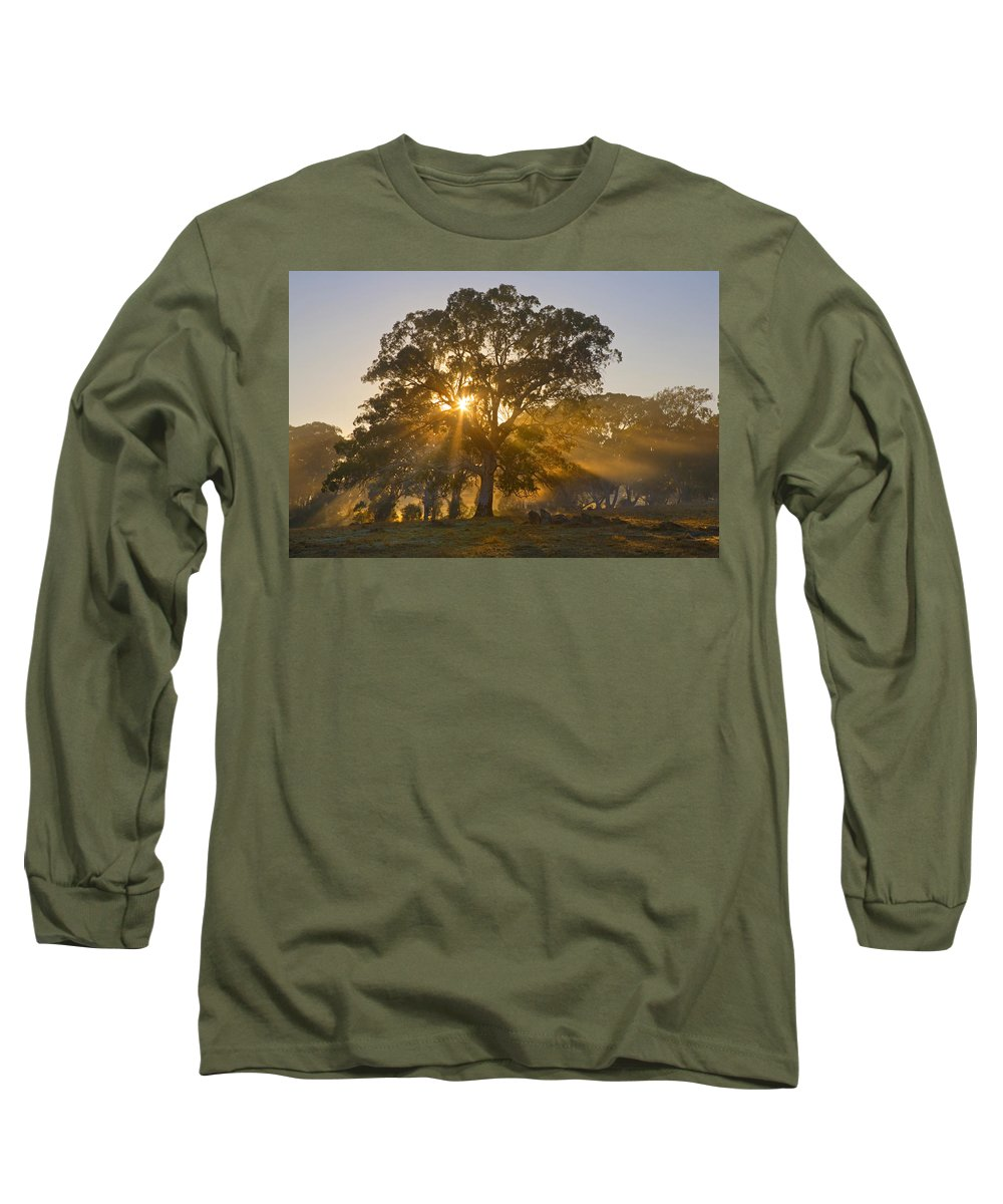 Tree Long Sleeve T-Shirt featuring the photograph Let There Be Light by Mike Dawson
