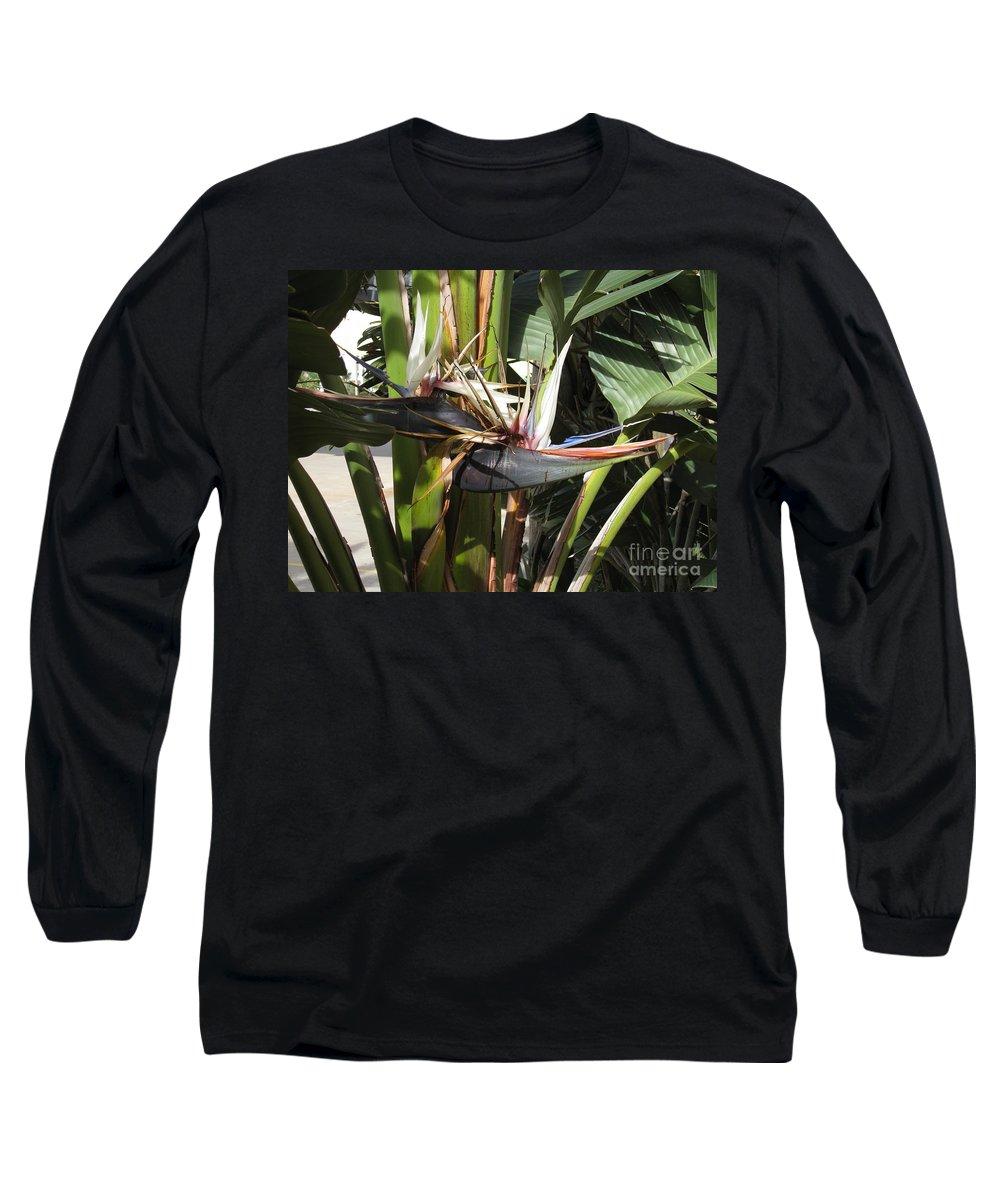 Bird Of Paradise Long Sleeve T-Shirt featuring the photograph Bird Of Paradise by Megan Cohen